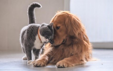 Cats and Dogs are Created Equal