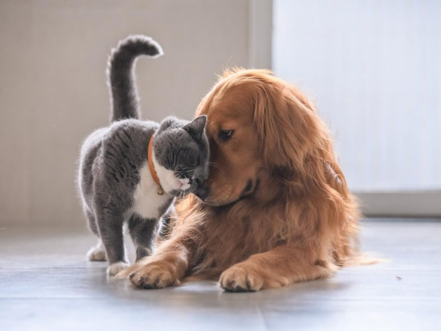 Cats+and+Dogs+are+Created+Equal