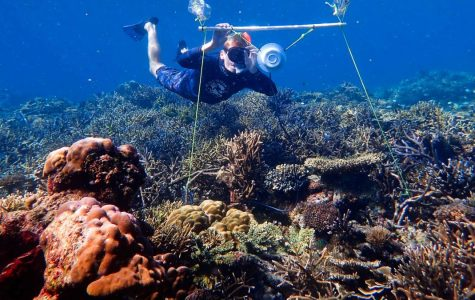 Reefs Saved by Speakers