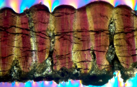 Cross-section of a dinosaur eggshell fossil under a microscope (image courtesy of Robin Dawson and Yale University).