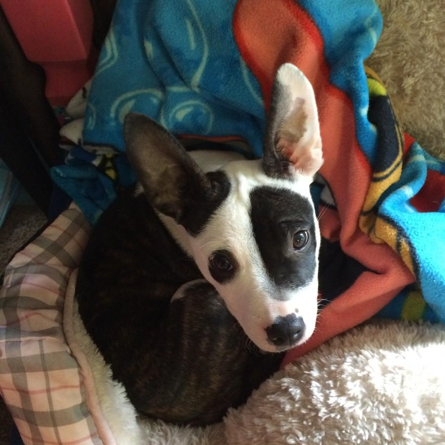 Taryn, an MVP who is currently being fostered by the Wright family.