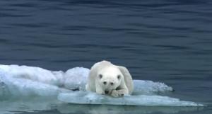 Polar bear habitats are melting right beneath them.