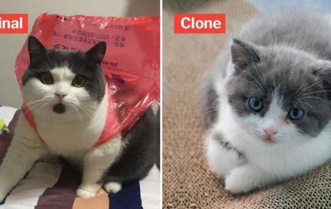 China's Copycat