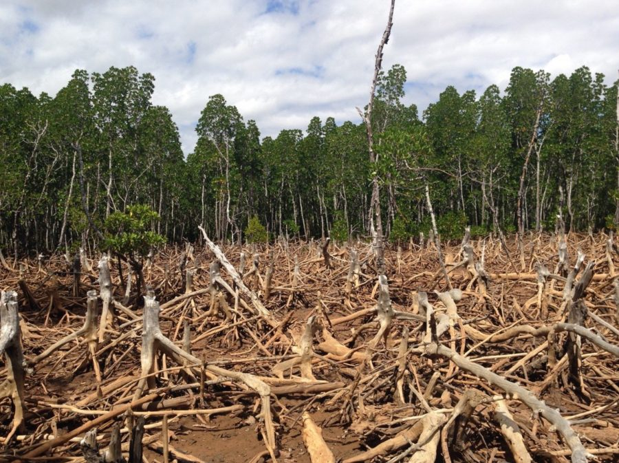 Deforestation is causing mass climate change, and it's getting out of control.