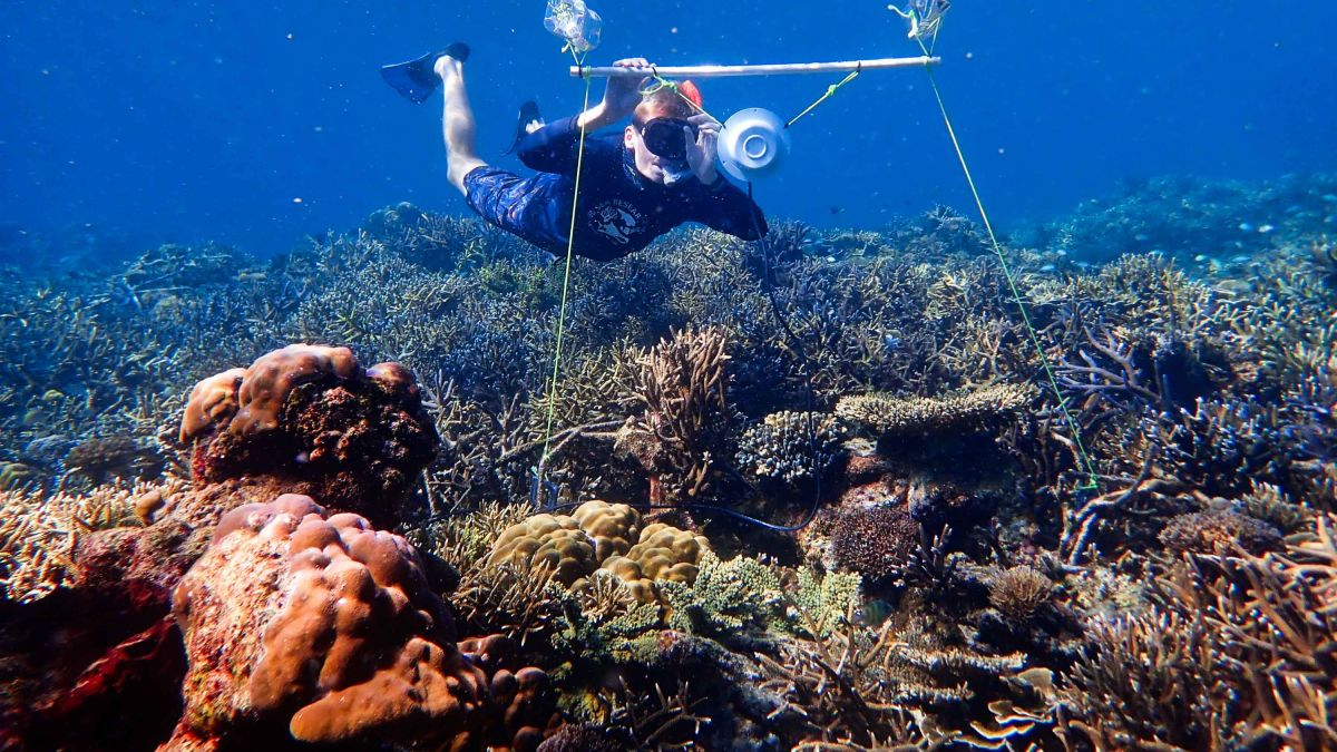 Diver underwater with speaker in coral reef (image courtesy of cnn.com).