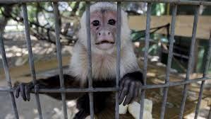 Texas Sanctuary Sees 12 Animal Deaths